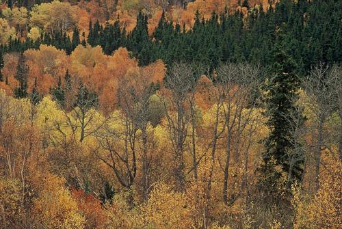 La forêt boréale Photo : Garth Lenz Initiale boréale canadienne