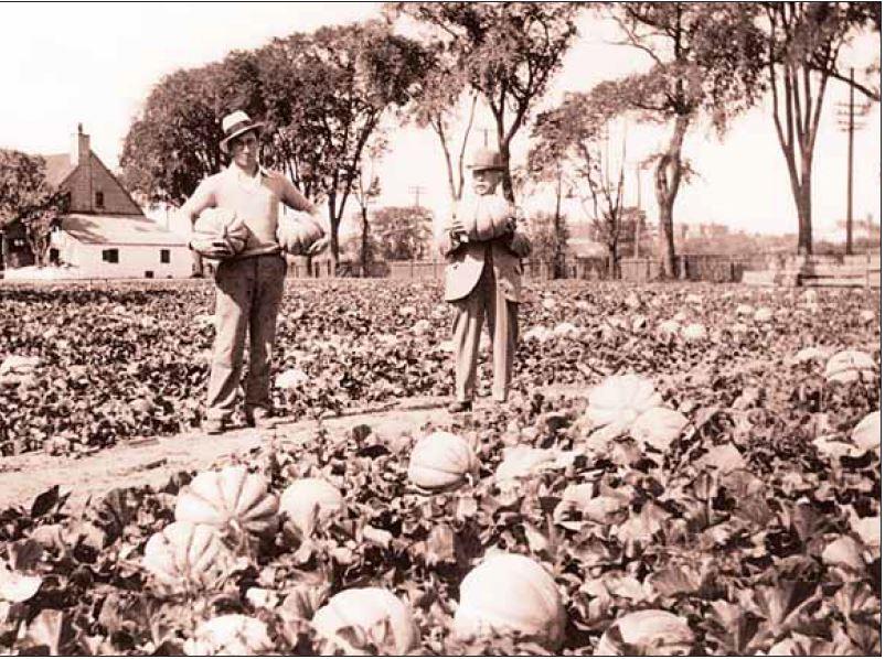 Des melons de Montréal Photo : Institut Fraser-Hickson, 1925